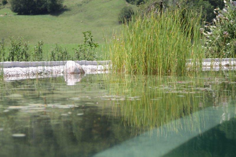 teich-pool-franjic-153