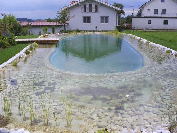 Schwimmteich Schnappschüsse